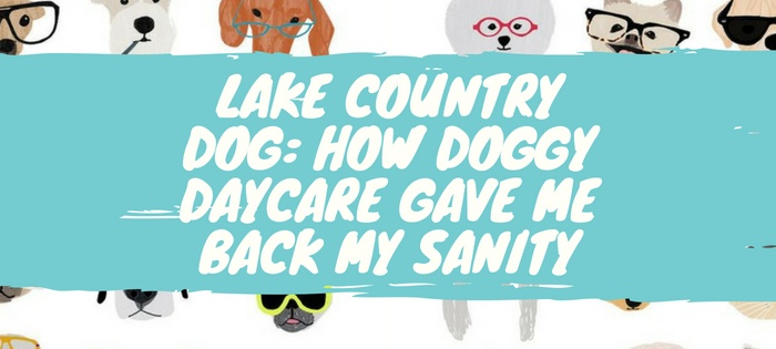 Lake Country Dog: How Doggy Daycare Gave Me Back My Sanity